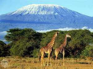 Kilimanjaro1233005352