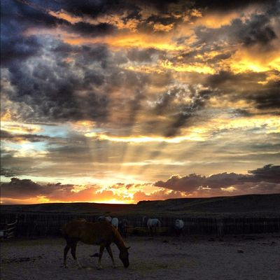 Sunsethorse