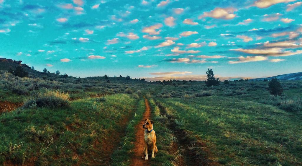 libby-gadbois-watson-dog-majestic