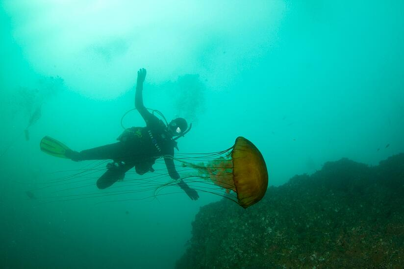 Scuba diving on a Marin Academy outing