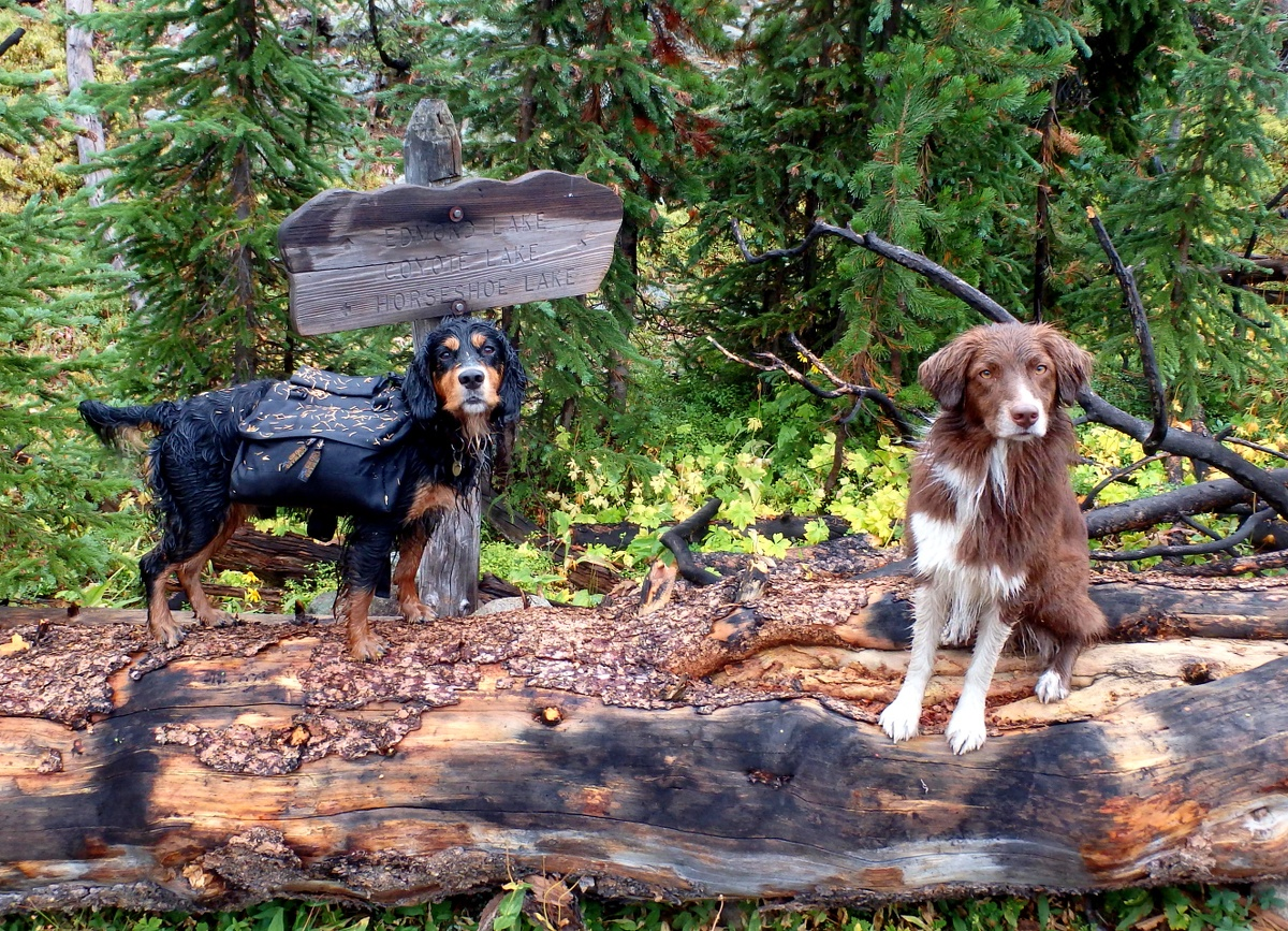 Dogs on the hiking trail