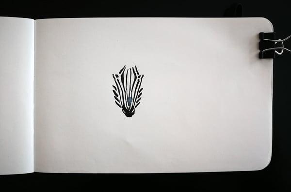 Just begun drawing of a zebra face