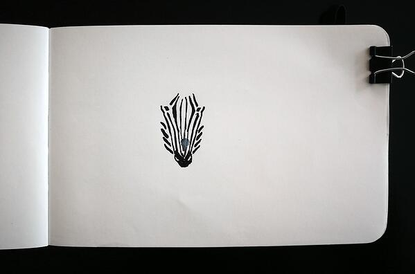 Just begun drawing of a zebra face