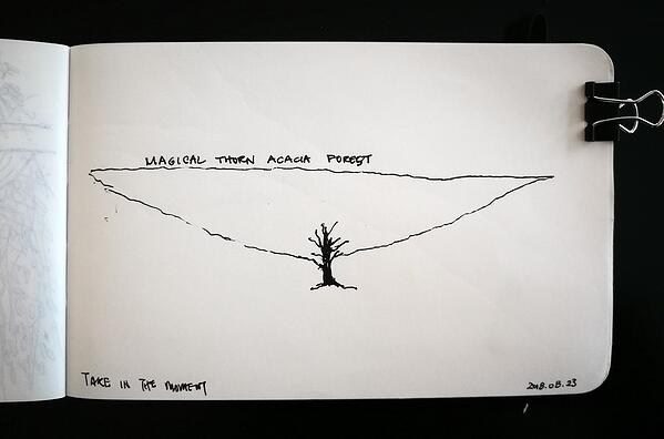 Thorn acacia forest sketched from memory