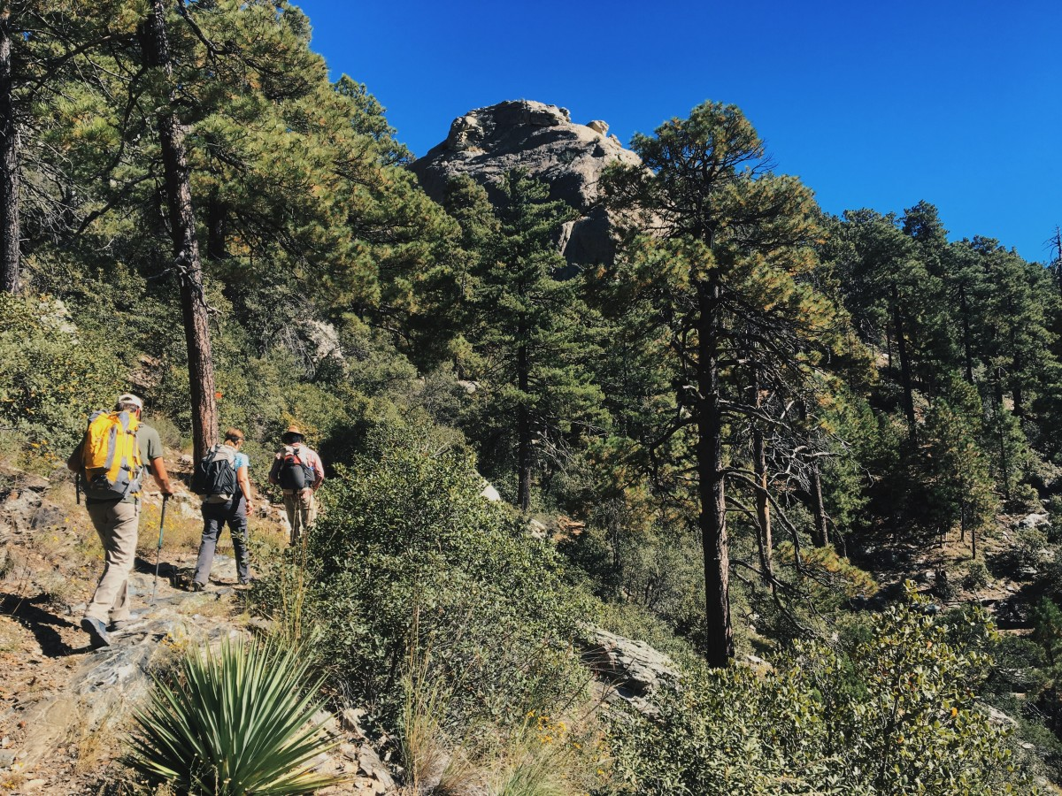 Three hikers on a trail in an arid forest setting