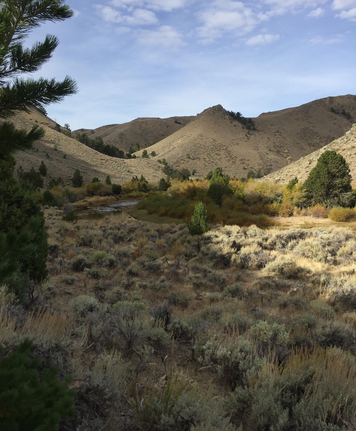 Sagebrush, hills, and trees in Wyoming's Red Desert