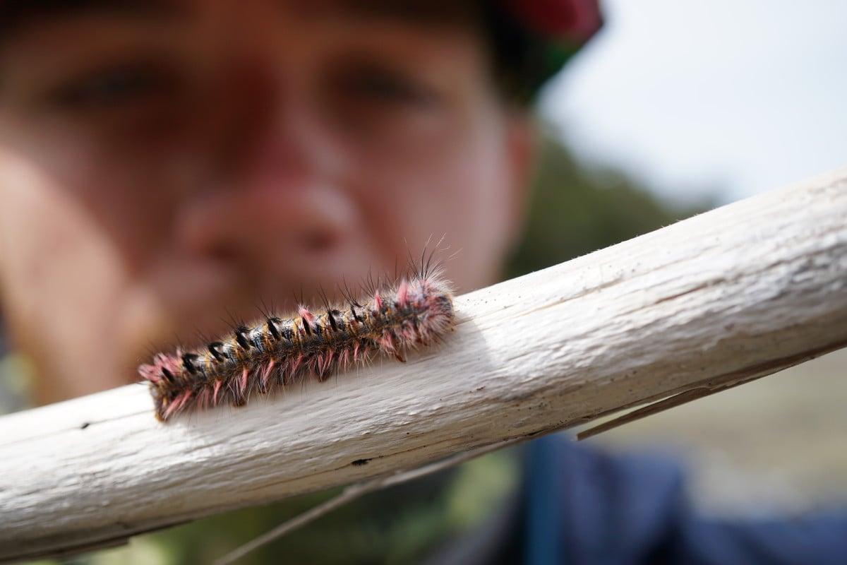 Close-up of a caterpillar on a stick