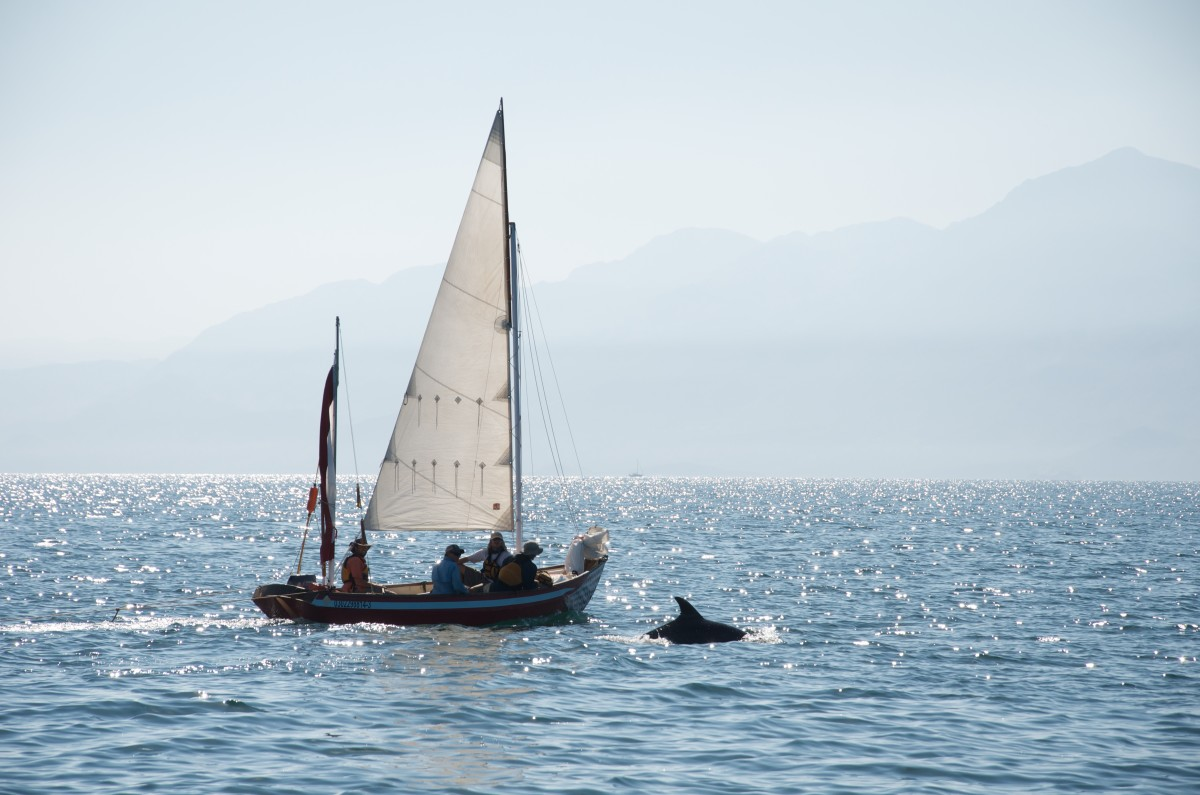 People sailing a Drascombe Longboat with a dolphin jumping from the water