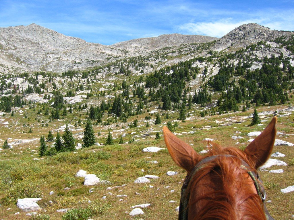 Scenery from Horse's Perspective