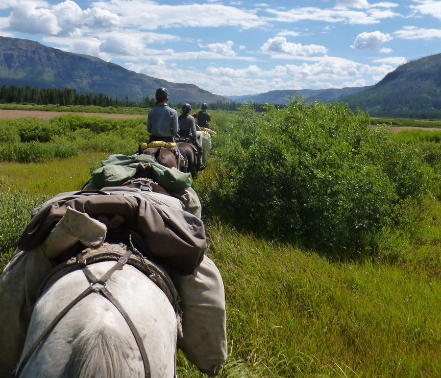 Horse pack train in a meadow
