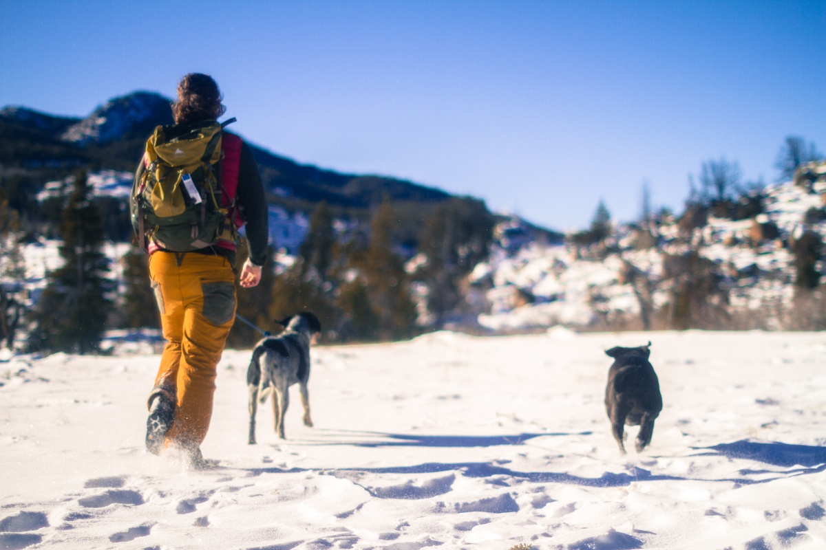 Hiking in the snow with dogs