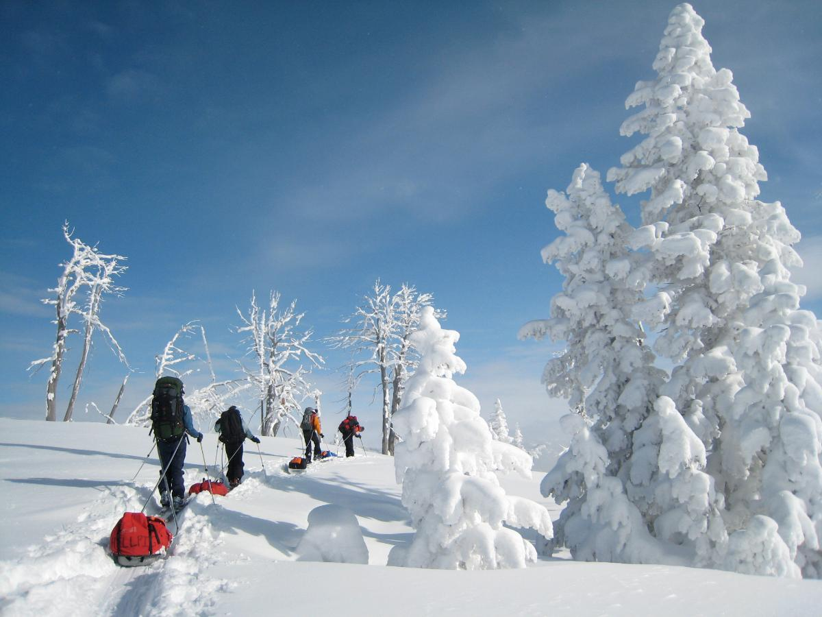 Group pulling sleds on skis across a snow-covered meadow surrounded by snowy trees