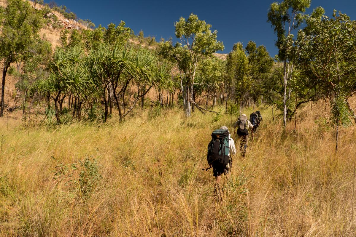 NOLS participants backpack in tall yellow grass