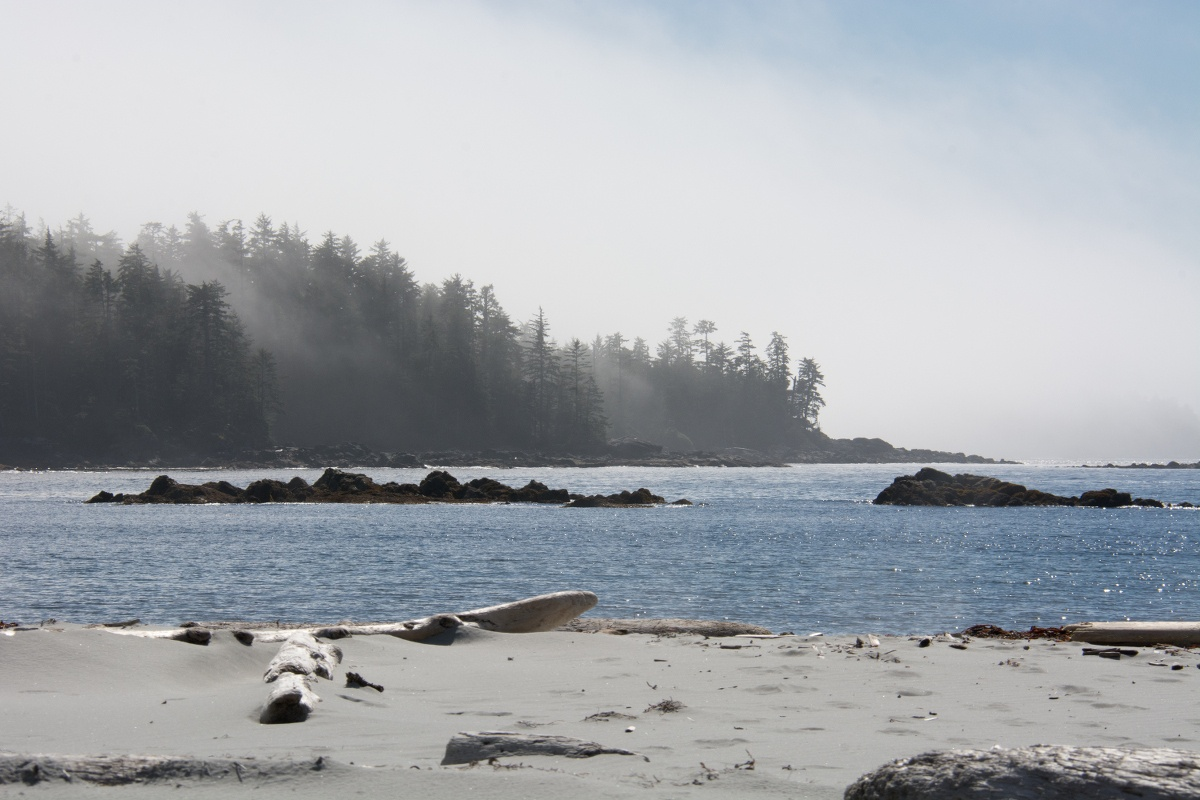 mist wafts over dark trees on a sunny morning on the beach