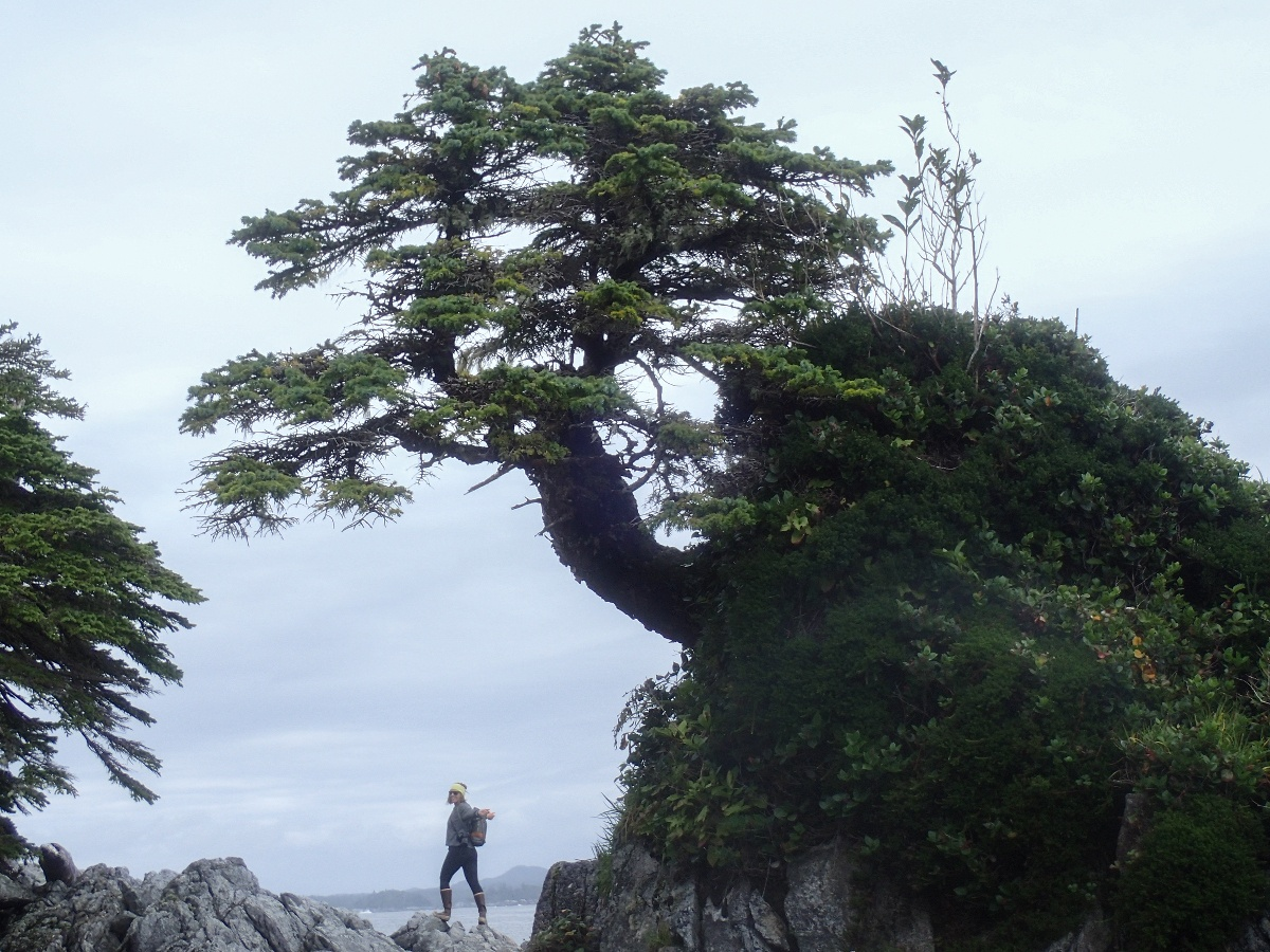 woman stands on rocky coast with gnarled tree leaning over her head