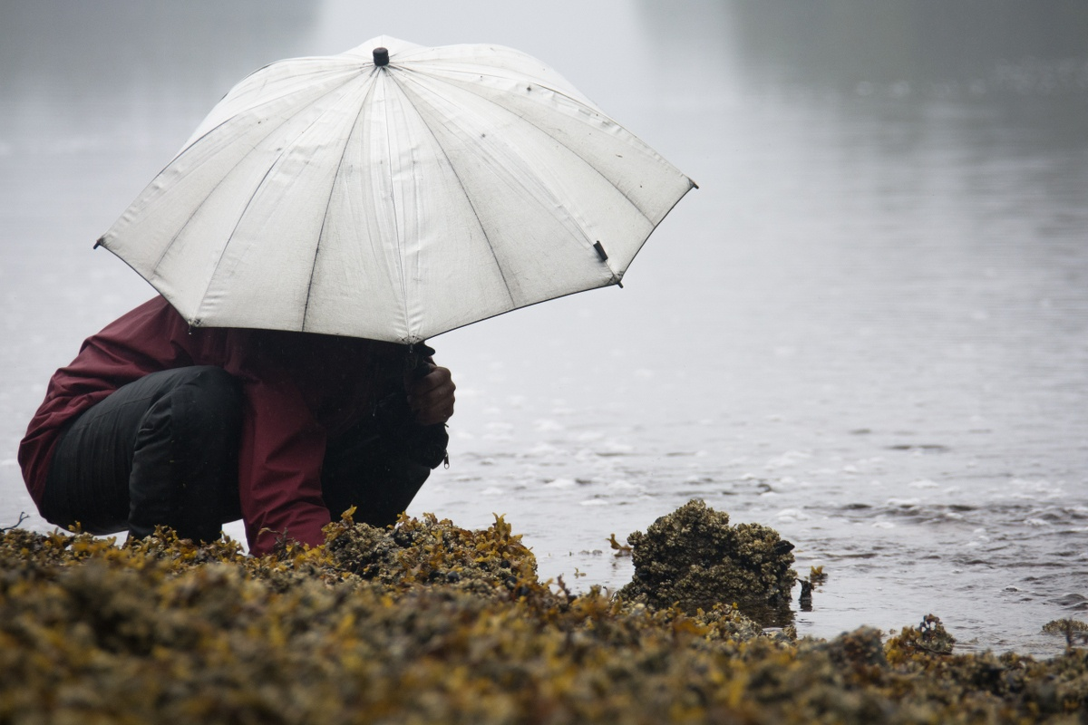 Person wearing maroon shirt and black pants squats on the edge of a tidepool holding a white umbrella overhead