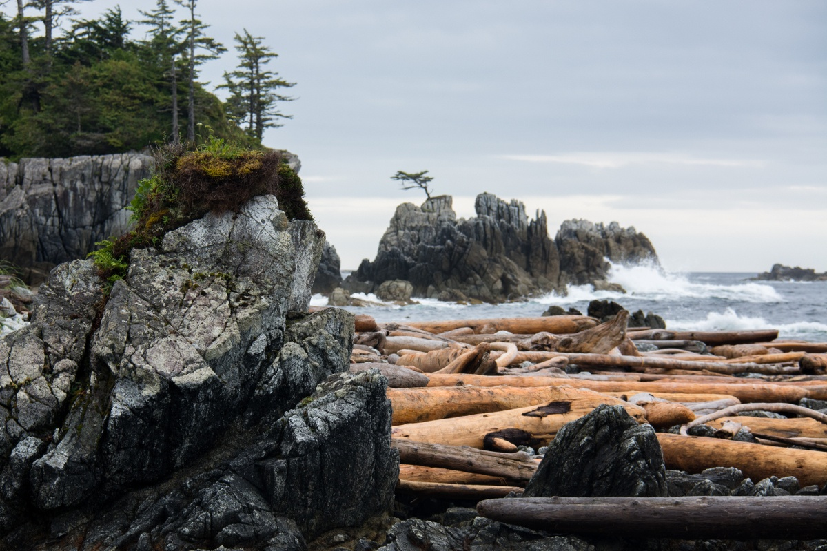 rocky shoreline with scattered trees and raft of large driftwood logs washed up. In the distance, waves crashing against a rocky island