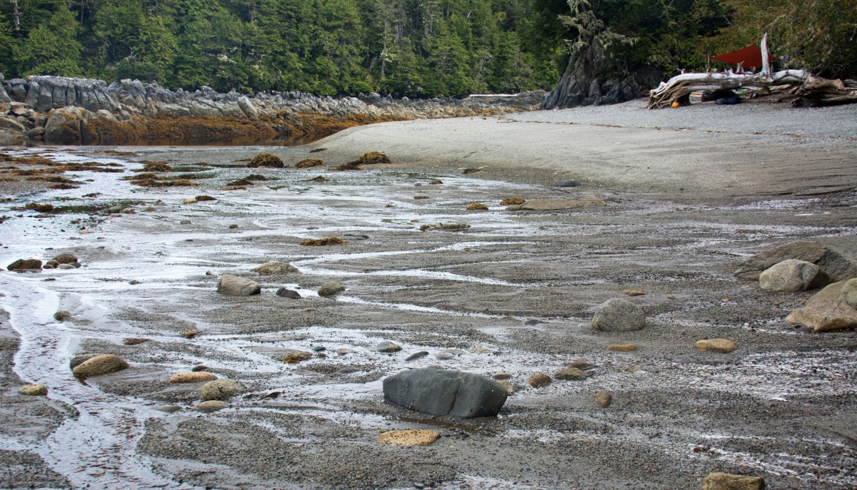 grey sand and scattered rocks at low tide on a shoreline bounded with pines