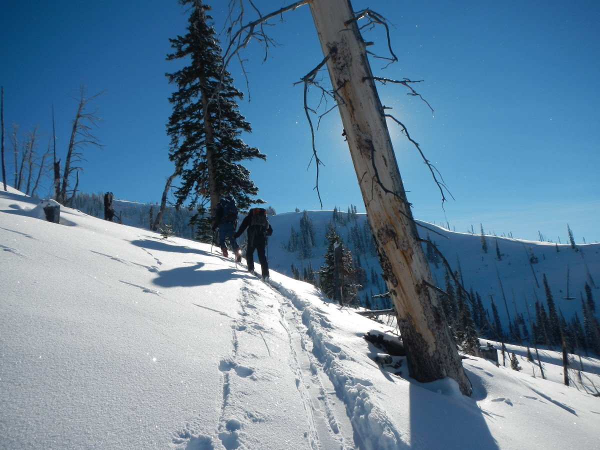 Skiers touring on a snowy trail