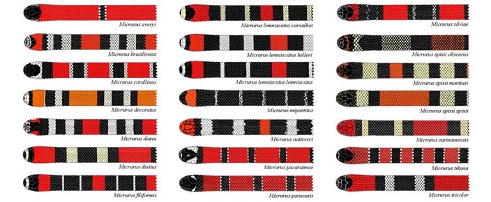 diagram of 21 possible patterns of snakes shown in red, orange, white, and black