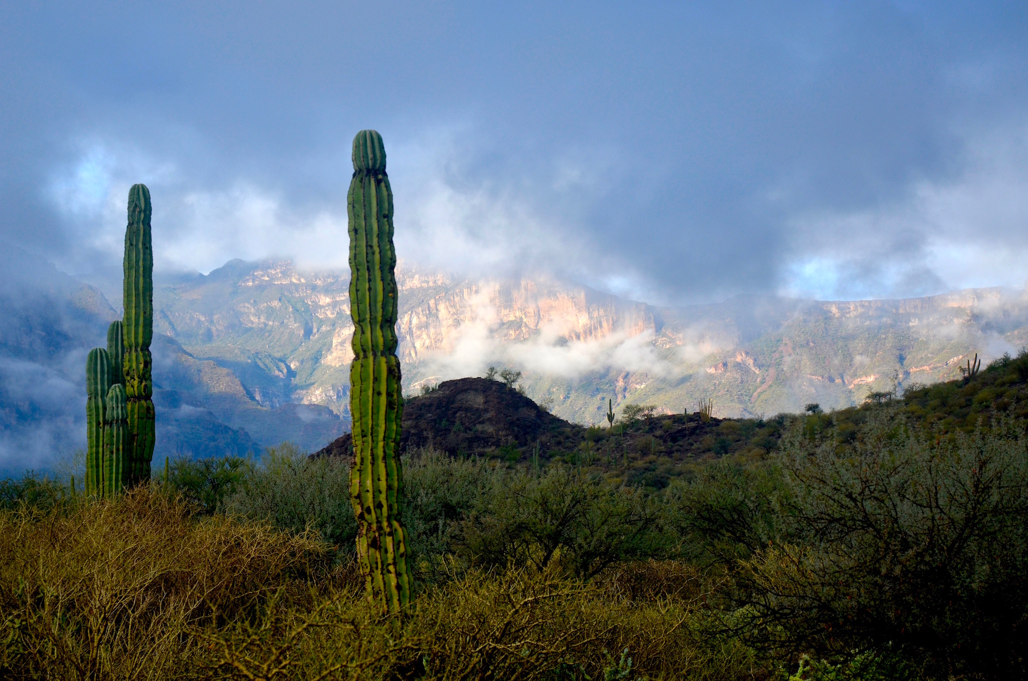 Cactus with clouds and mountains in the background