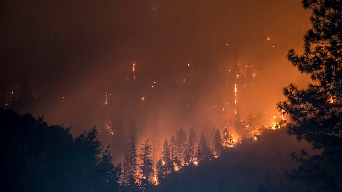 wildfire consumes a forest with thick smoke and sparks against blackened pines