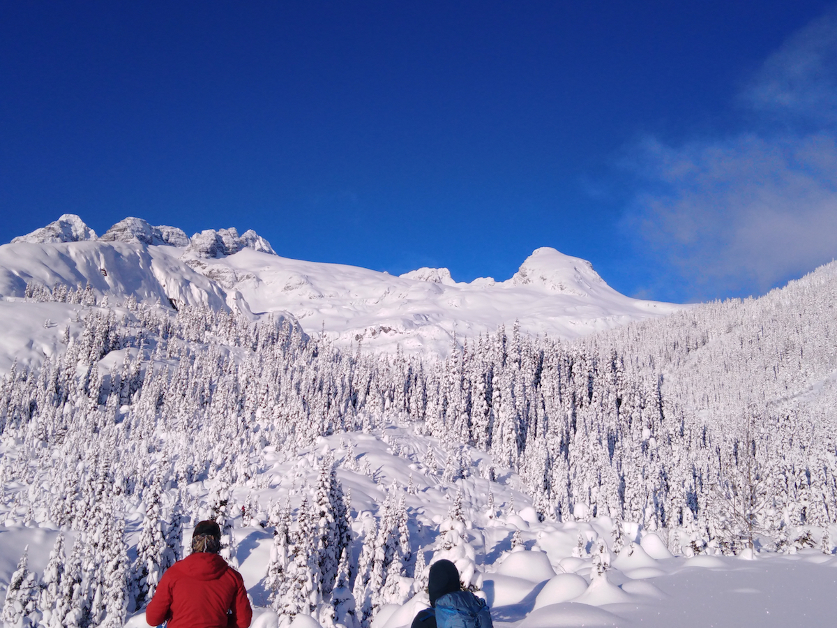 two backcountry skiers look out at a snow-covered trees and mountains on a sunny day