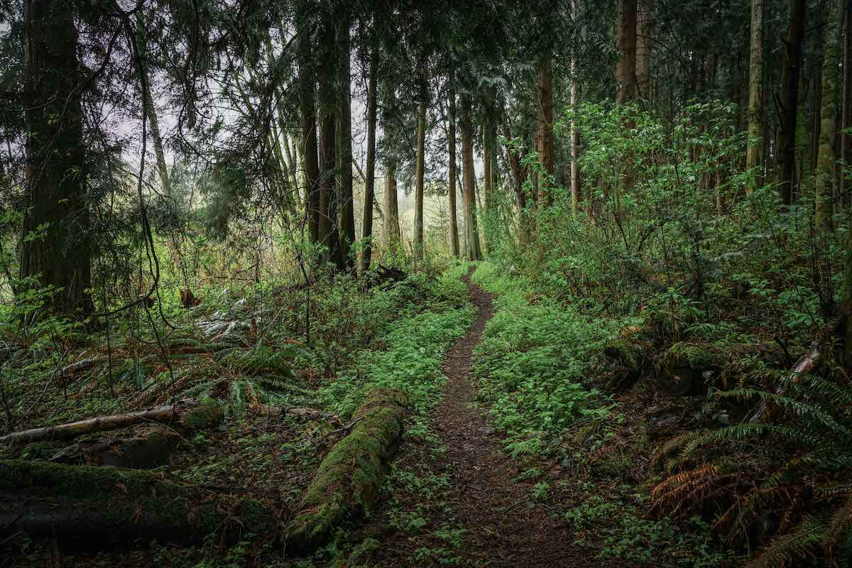 trail winding through lush green forest in the Pacific Northwest