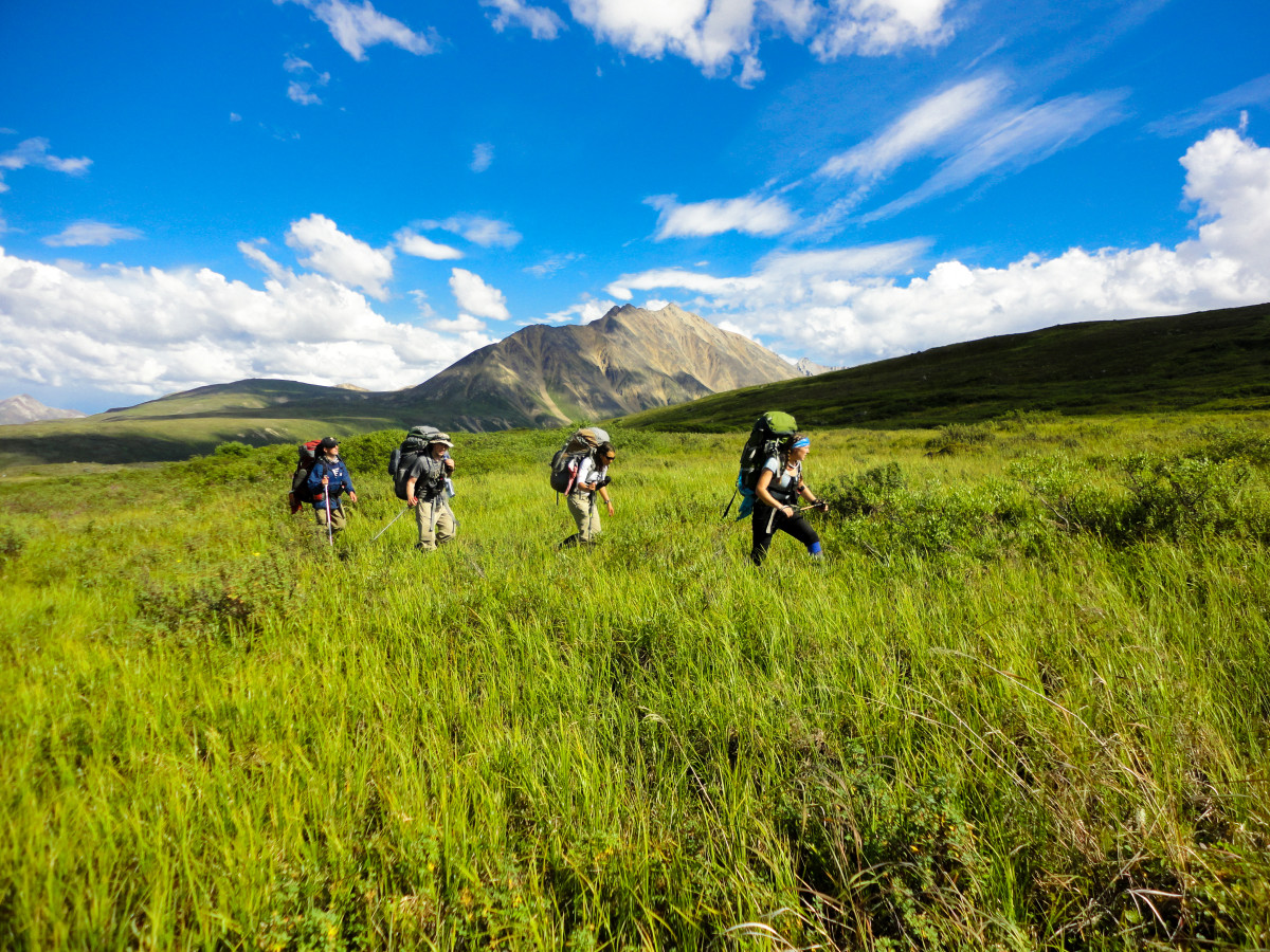 Group hiking through sunny Alaska meadow