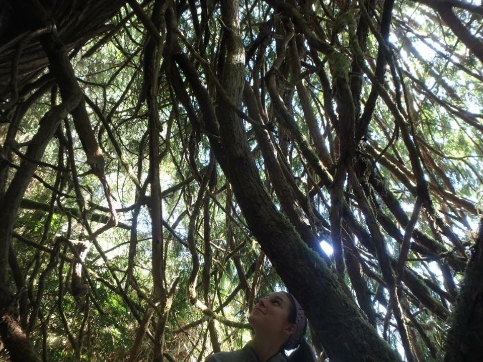 NOLS student gazes up at sun filtering through tree branches