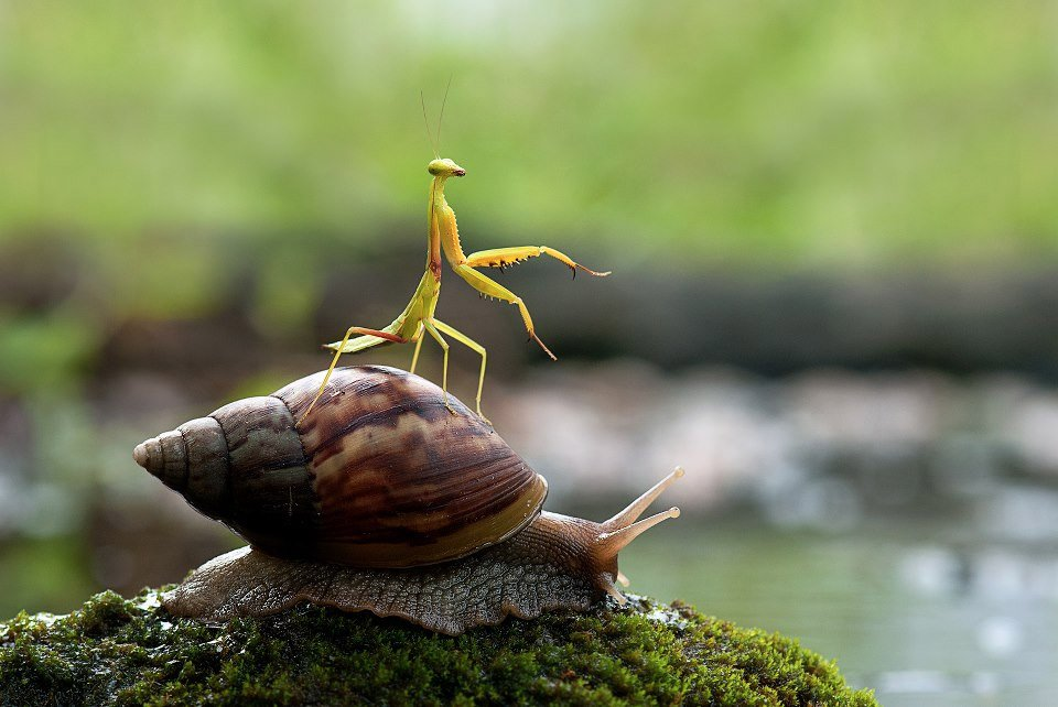 Snail and Praying Mantis