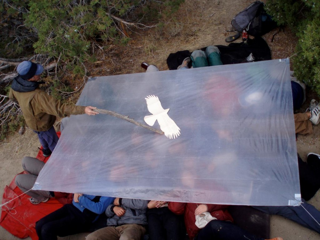 people lie under clear plastic tarp while man points at a white bird silhouette on top